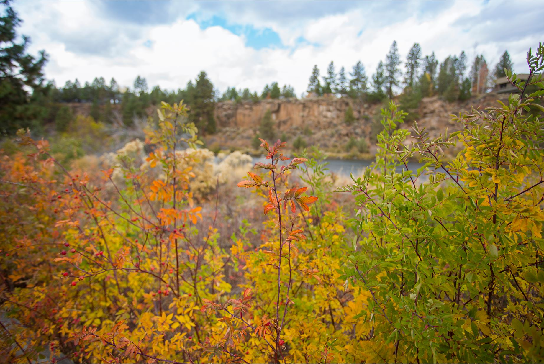 Fall Foliage in Bend Parks