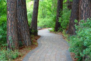 Pioneer-park-trail---trees-7-1-10-002
