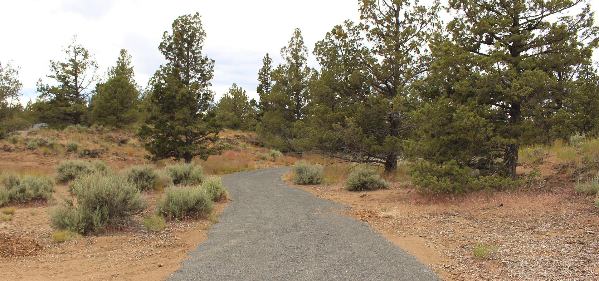 Rockridge-Community-Park-Unpaved-Path