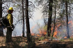 Shevlin Park controlled burn