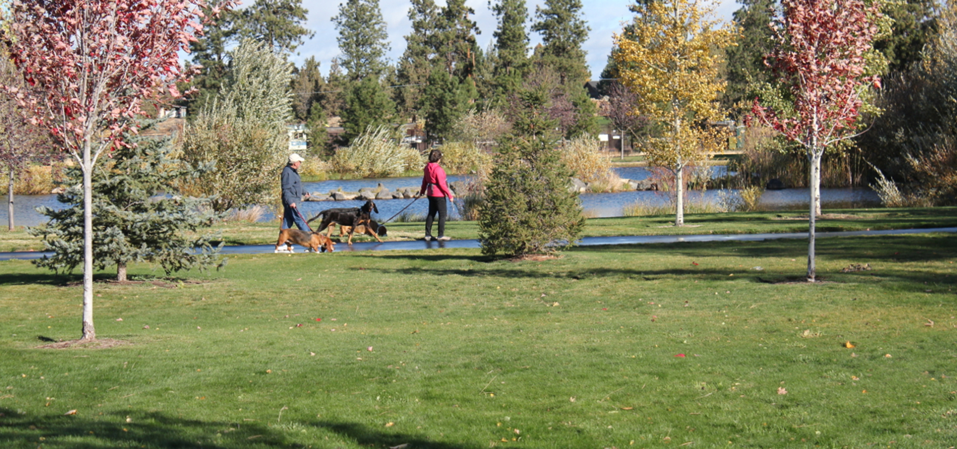Pine Nursery Trail with dog walkers