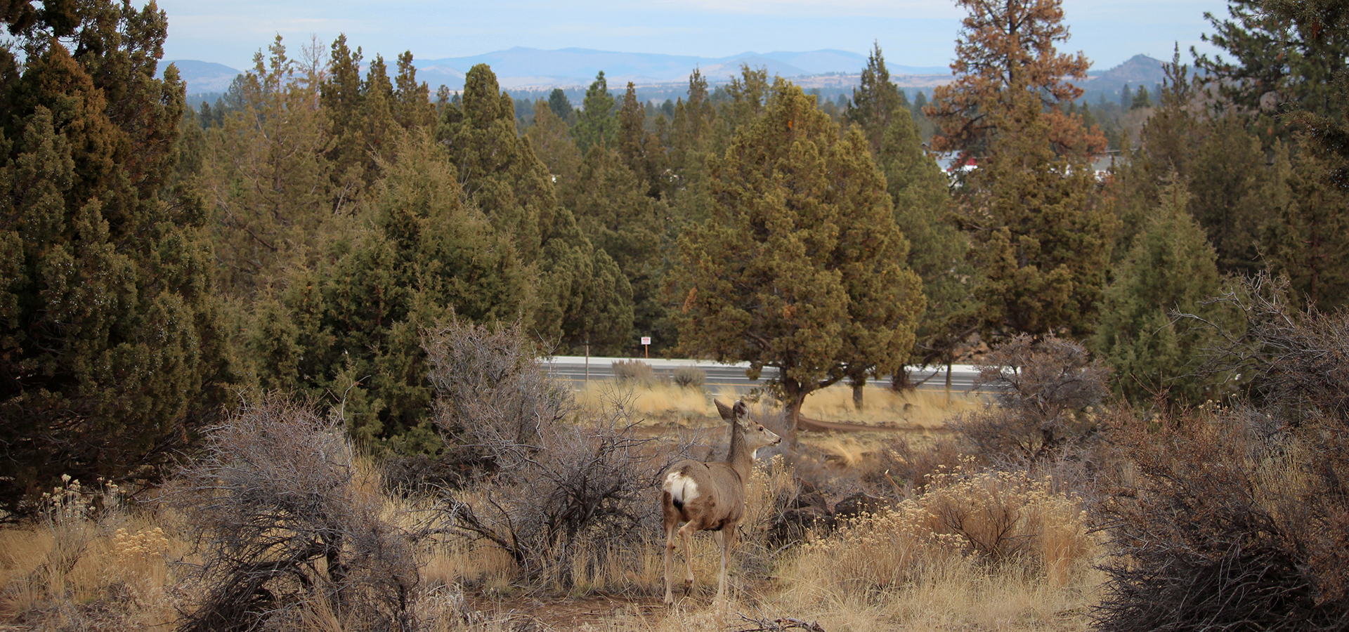 Stone-Creek-Park-Wildlife-and-Newberry-Crater