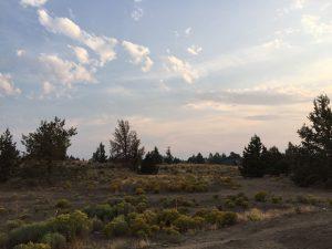 Eagle Park Project