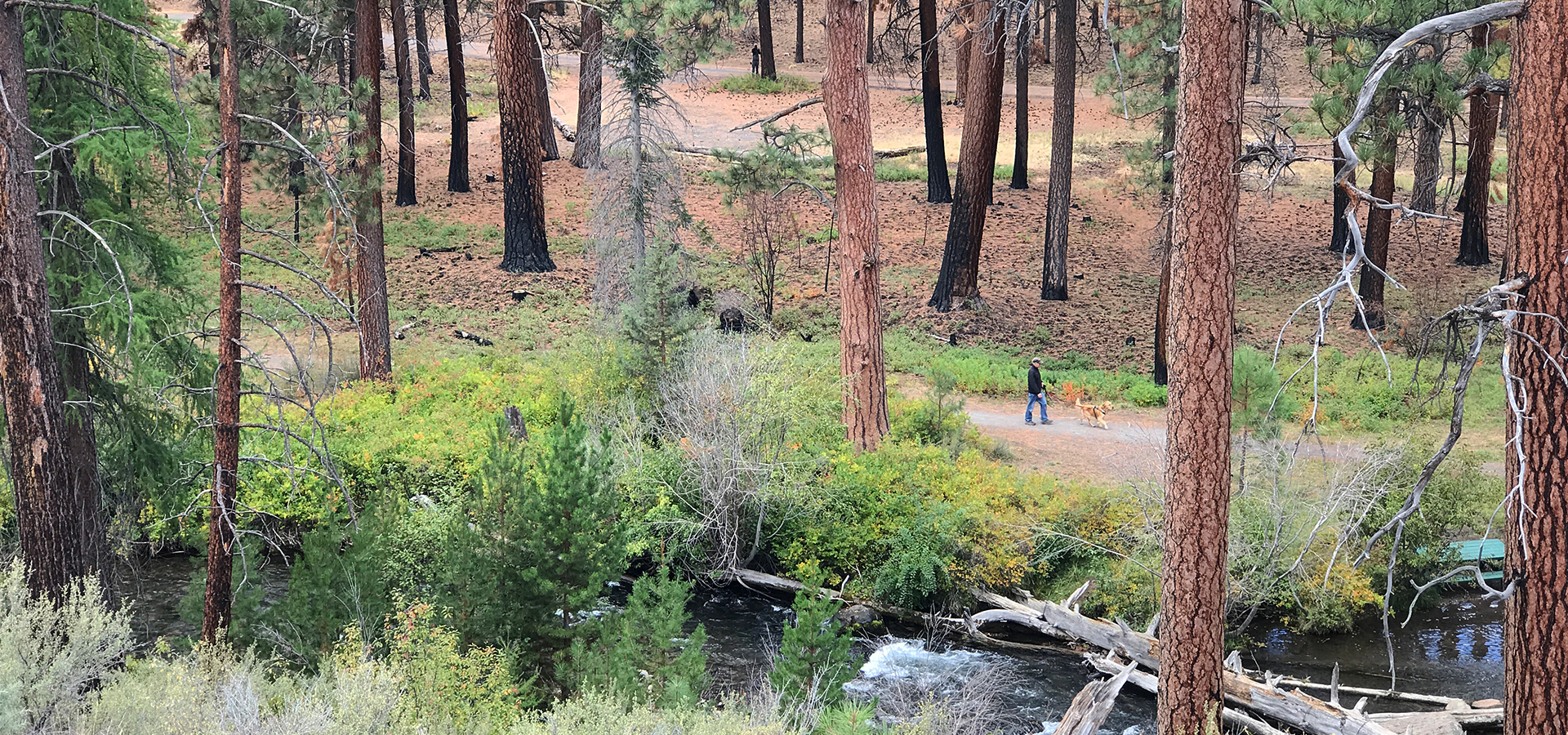 Image of Tumalo Creek and a dirt trail in Shevlin Park.