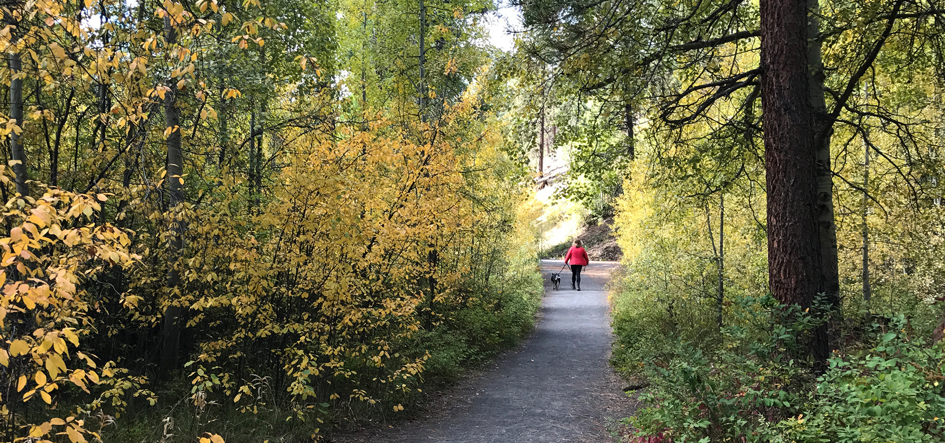 Image of a soft-surface trail running through aspen trees in Shevlin Park.