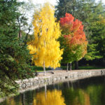 Colorful trees reflecting in river at Pioneer Park