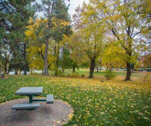 Picnic table in Drake Park