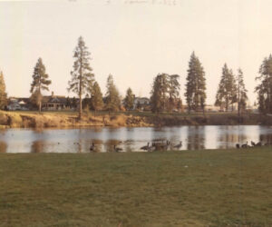 Canada Geese in Drake Park - 1967
