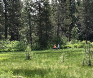 Freemont Meadow in Shevlin Park