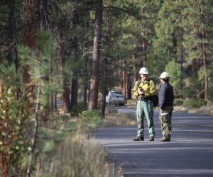 Forestry staff in Shevlin Park