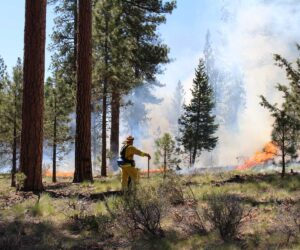 Forester watching prescribed fire in Shevlin Park