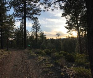 Sunset view from Shevlin Park trail