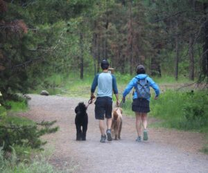 Hikers with dogs on leash in Shevlin Park